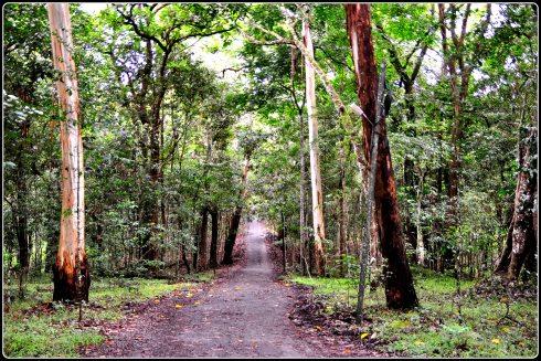 Enchanting jungle path